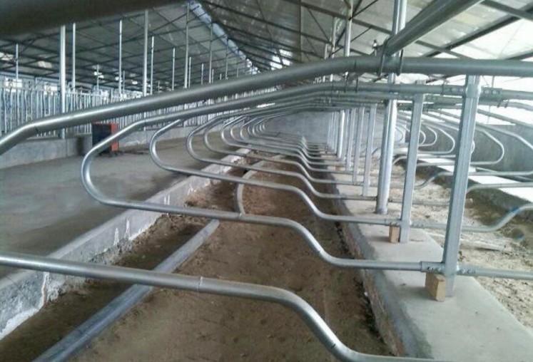 hot dip galvanized cow/cattle free stall - Durable Cow Headlock / Cattle Headlock