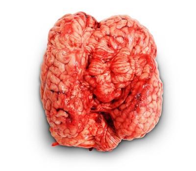 Cervelle - Abats