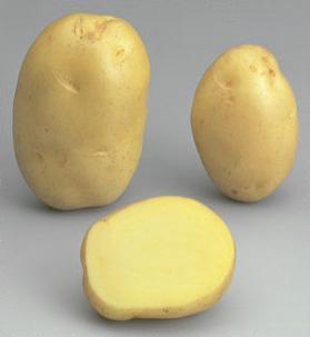 Potatoes - Yellow skin - FELSINA