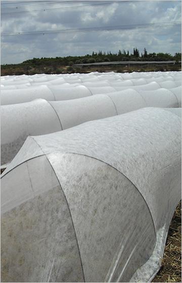 Fabricant de Spunbond pour la  couverture de culture - Spunbond  agriculture 100% polypropylène