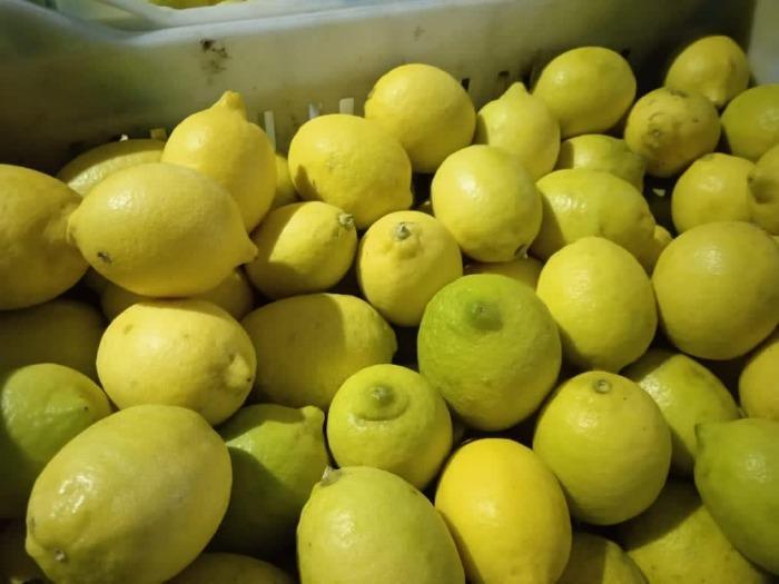 Limón Egipcio - GANETELZOHOR