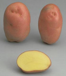 Potatoes - Red skin - DESIREE