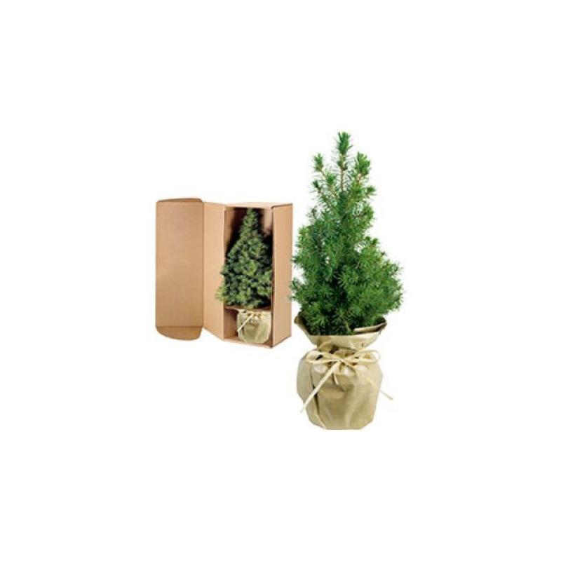Weihnachtsbäumchen, natur, Höhe 20-30cm - Geschenke