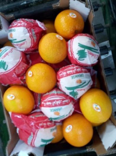 Egyptian Orange - Valencia