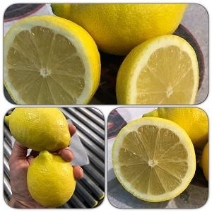 Spanish fresh lemons, oranges and other fruits - wholesale