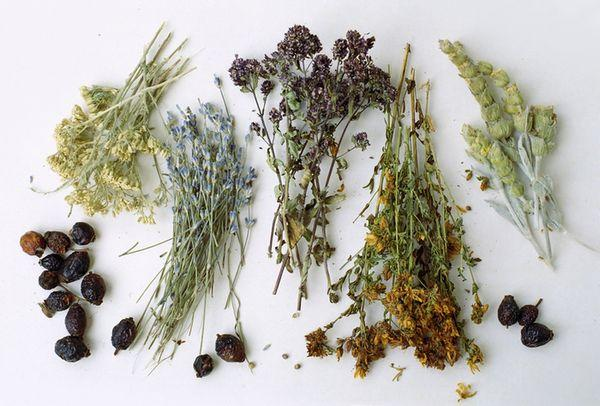 Herbs - Herbs and seeds from Ukraine