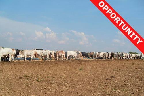 Farmland for sale in Mato Grosso Brasil - Reference: FARM MT-014