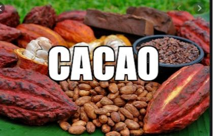 cacao - recherche d'un acheteur