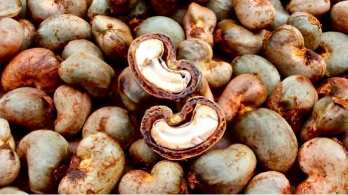 Noix de cajou - Fournisseur Anacarde , noix de cajou , côte d'ivoire