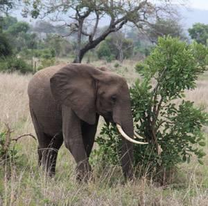 Gran Tour de Sudáfrica. Mayores de 55 años - Viaje para seniors a Sudáfrica. 16 días y varios safaris