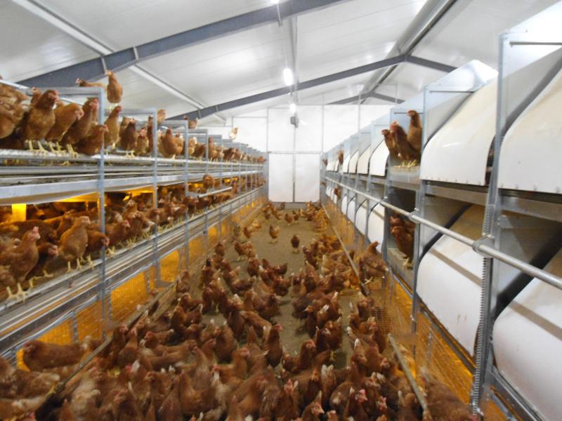Laying hens-aviary PRO 10 - null