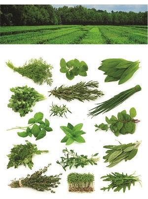 Herbs Aromatique