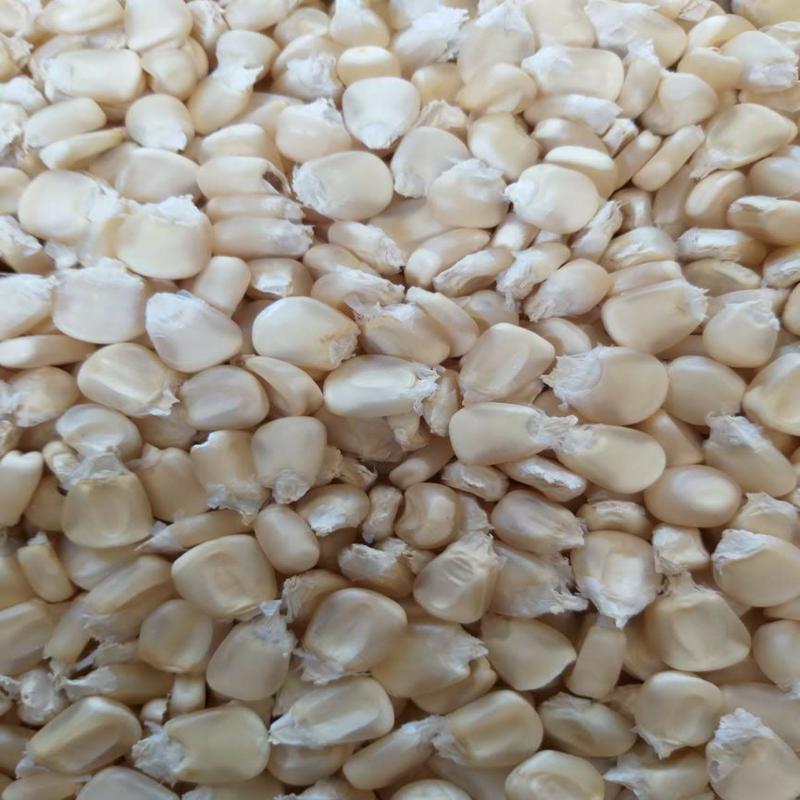 Corn - White