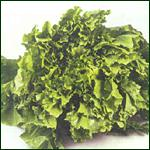 Lettuce - Frisbi