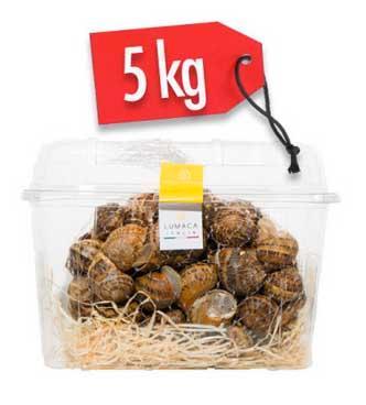 LUMACHE HELIX ASPERSA MULLER 5kg