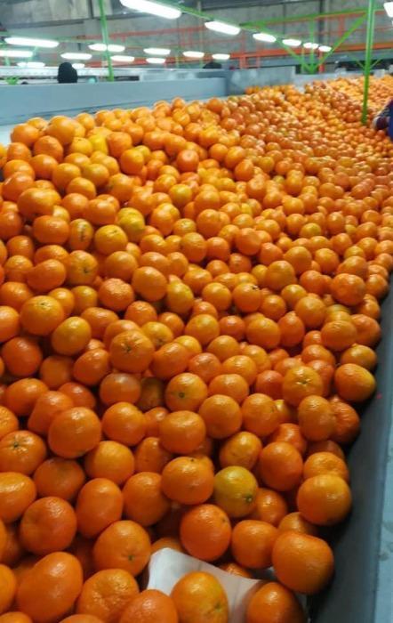 мандарин - Органический