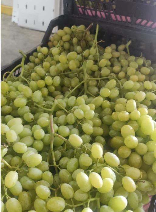 Struguri - Sultana Grapes