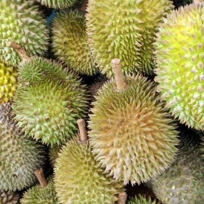 Durian / Kotzfrucht - Exotische Früchte: Durian Kaufen