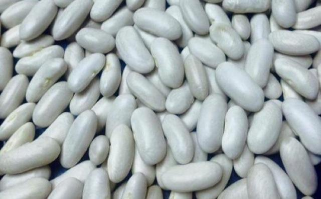 "Haricots blancs égyptiens - "" GANETELZOHOR """