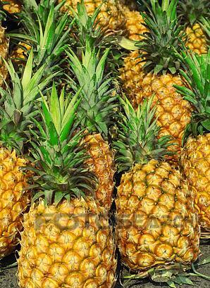 PINEAPPLE - WHOLESALE PINEAPPLE