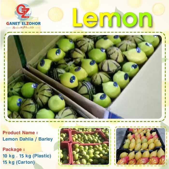 Limone egiziano - (Dhalia & Barley)