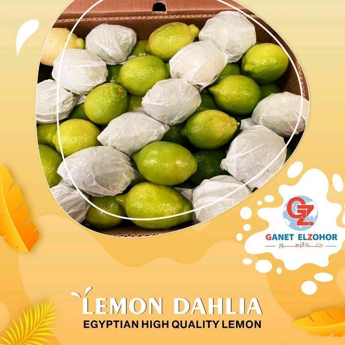 Лимон - Далия / ячмень