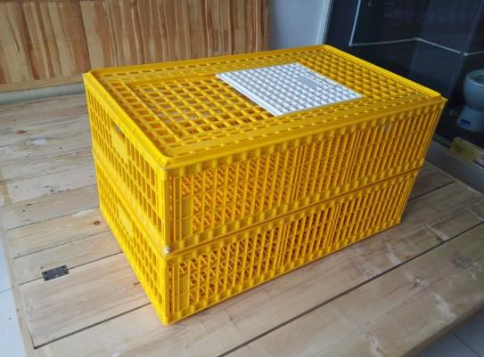 960×560×270mm chicken/duck/poutry transport cage  - Poultry plastic chicken/duck/dove/pigeon transport cage /crate/case/box