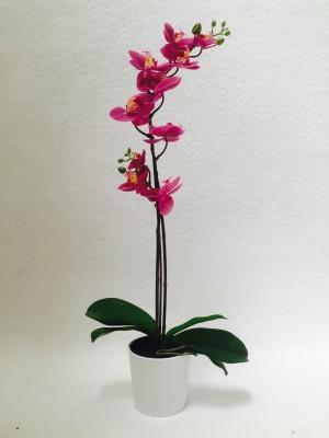 Location de plante Orchidée artificielle - null