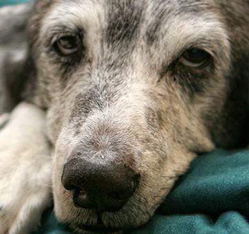 Hundekrankenversicherung Bremen