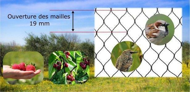 Filet de protection contre les oiseaux