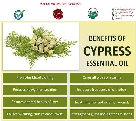 Organic Cypress Oil  - USDA Organic