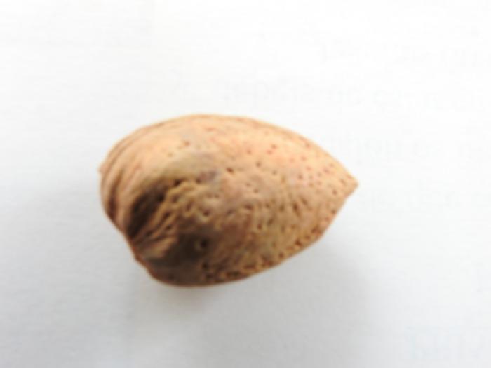 almendras - semilla de almentra con cascara