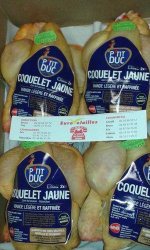 COQUELET - JAUNE