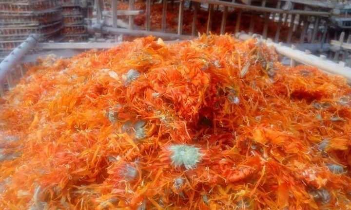 calendula flowers - marigold flowers