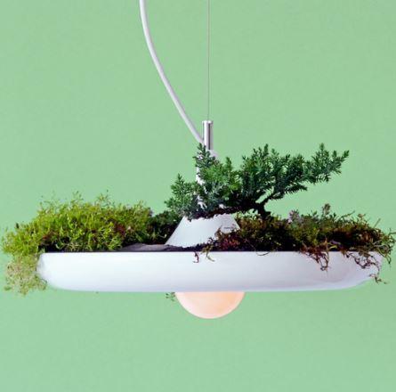 Lampe végétale de plafond