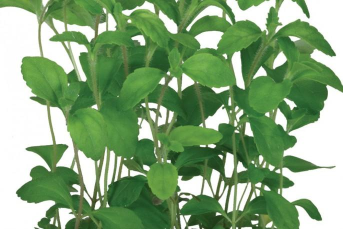 Honny Cress - Micro végétaux