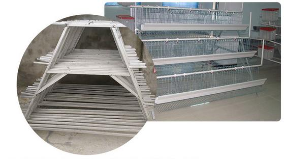 Chicken battery cages - Animal Cages