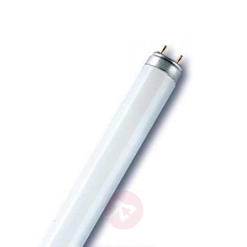 G13 T8 30W Fluora plant fluorescent bulb - light-bulbs