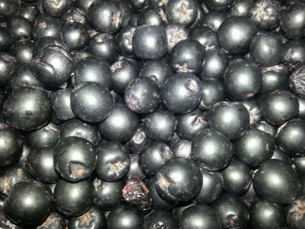 Рябина черноплодная (Aronia)