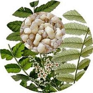 Ancient Healer Frankincense (Olibanum) Oil 15ml to 1000ml - Frankincense (Olibanum) Oil