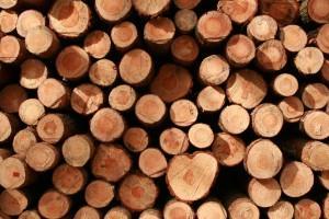 Dried wood