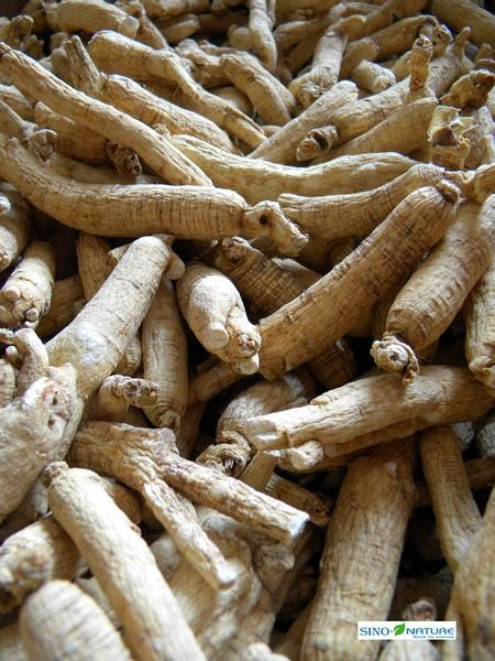 Ginseng root - White whole