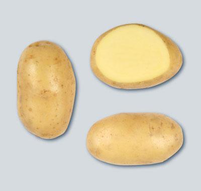 Potatoes - Yellow skin - CHALLENGER