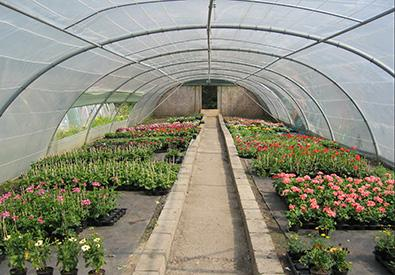 Parcs et jardins - Services