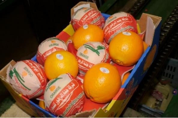 Egyptian Navel orange  - Organic
