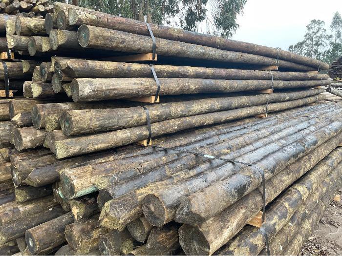 Postes de madeira preservados  - Suportes de madeira para linhas aerias