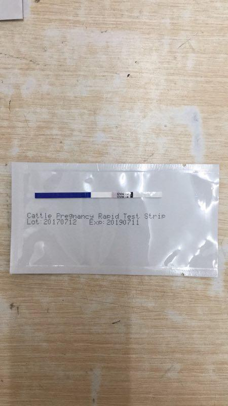 cow/cattle test pregnancy test paper by urine,milk and blood - cow test strip