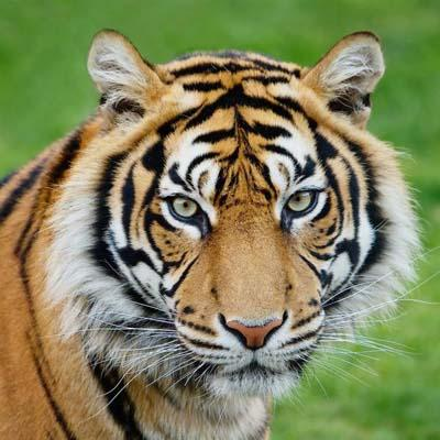 7N 8D Jaipur, Ranthambore (Tigers), Agra (Taj Mahal) Tour