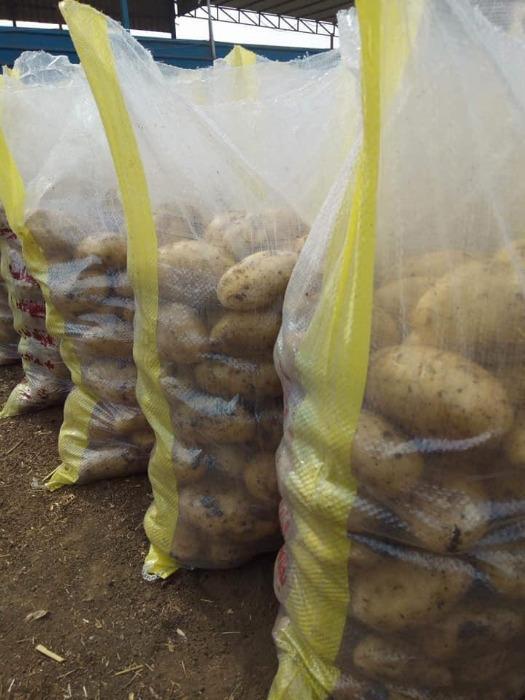 Patatas - Orgánica
