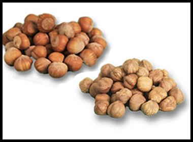 Fresh Hazelnut Inshell or shelled